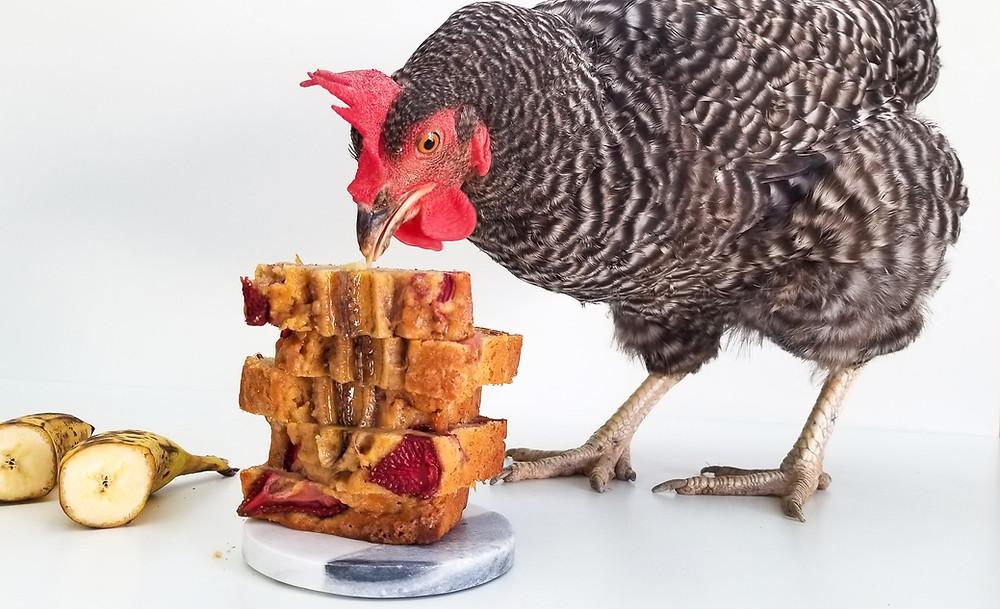 chicken pecking strawberry banana bread