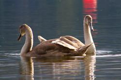 Wildlife in Coniston