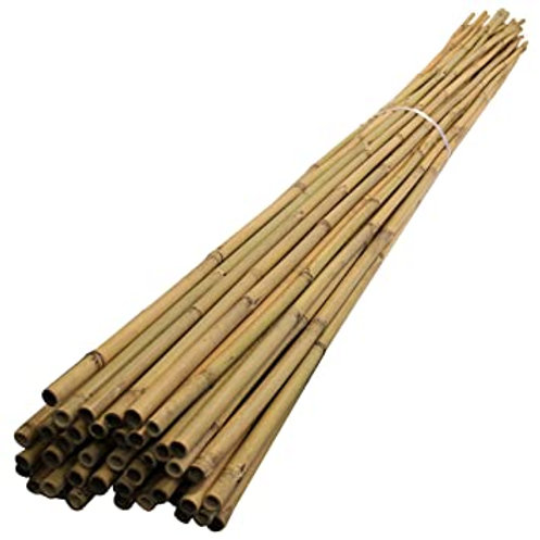 Bamboo Canes (4ft, 6ft, 8ft)