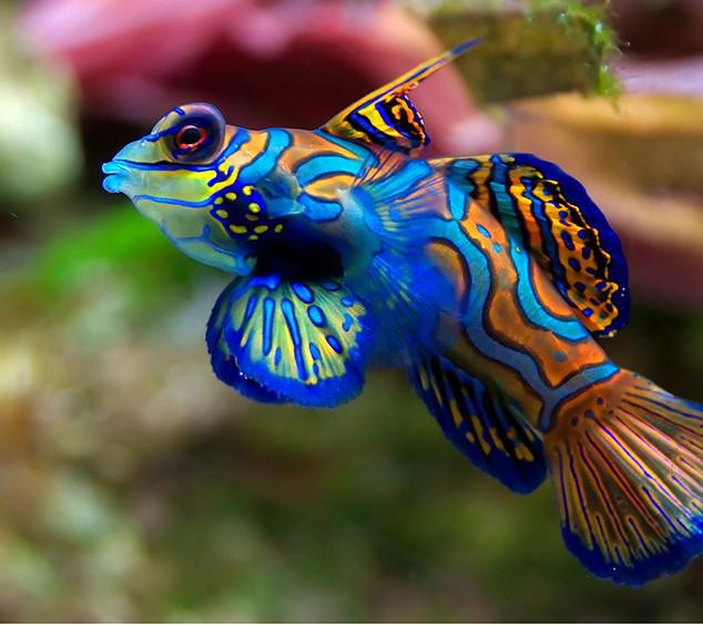 More Marine Fish