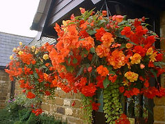orange hanging baskets.jpg