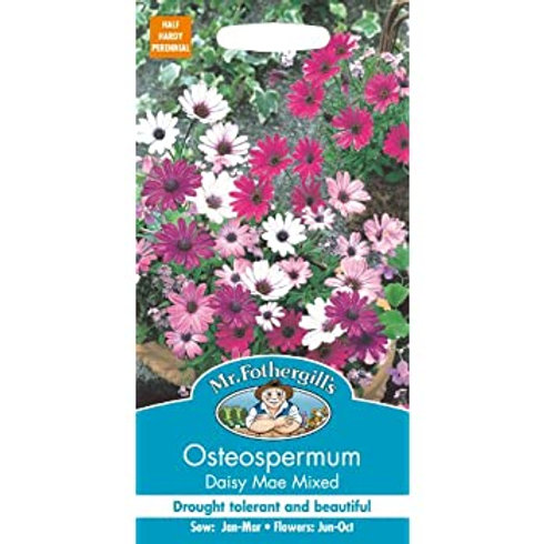 Mr Fothergills Seed Osteospermum