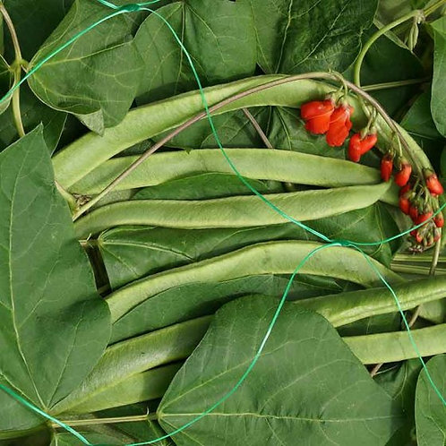 Pea & Bean Netting - Green