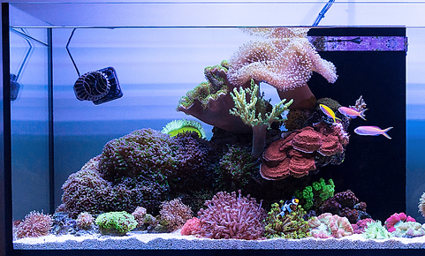 coral sand in marine tank.png