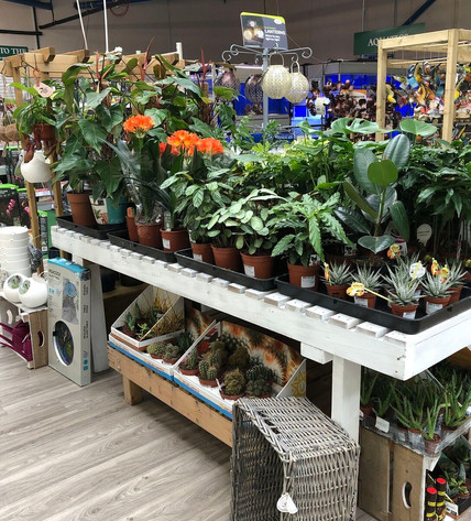 Extended Houseplant Area