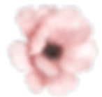 watercolour flower pic.png