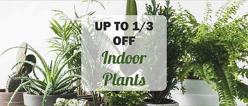 indoor plants sale offer 2020.jpg