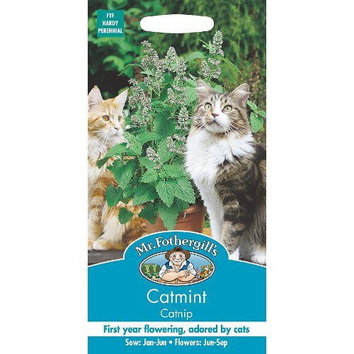 Mr Fothergills Seeds Catmint