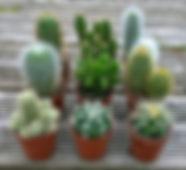 cacti in pots.jpg