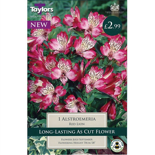 Taylors Alstroemeria Red Lion