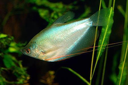 More Tropical Fish
