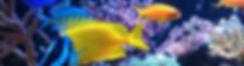 colourful marine fish.jpg