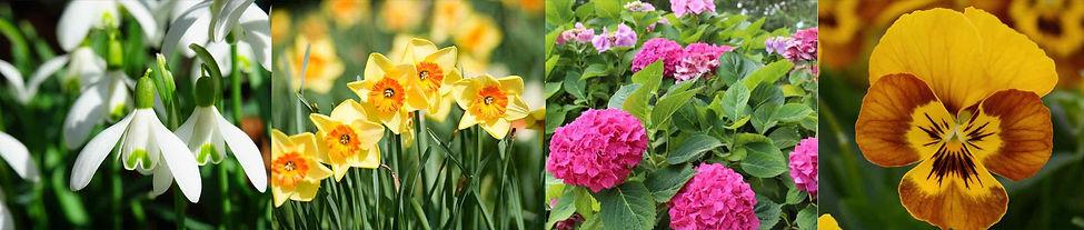 seasonal colour title pic.jpg