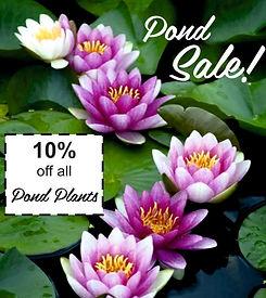 POND PLANT SALE.jpg