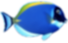 DORY FISH PNG.png