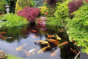 stunning pond 3.jpg