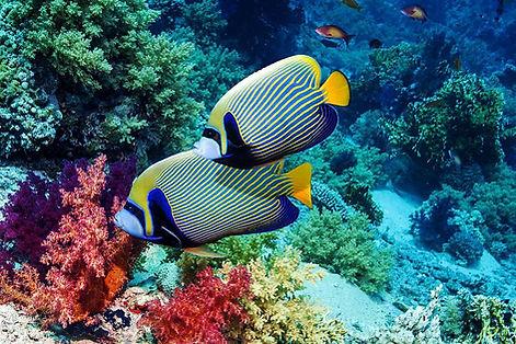 MARINE FISH AND CORAL.jpg