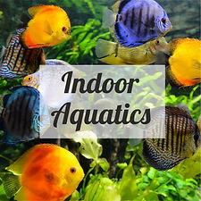 indoor aquatics.jpg