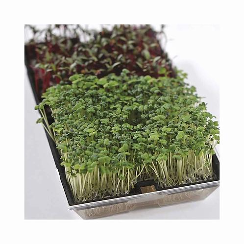 Mr Fothergills Seeds Microgreens Growing Kit