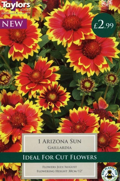 Taylors Bulbs Gaillardia Arizona Sun