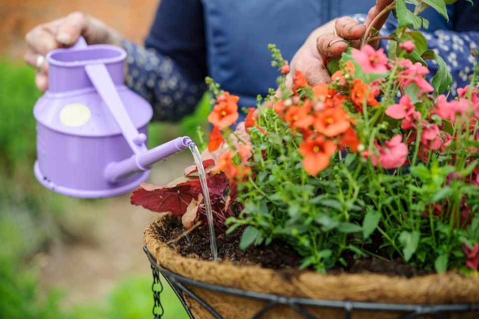 Watering Hanging Basket