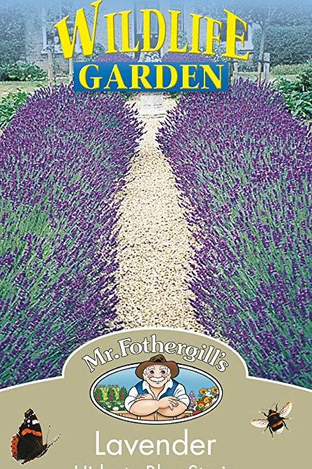 Mr Fothergills Seed Lavender