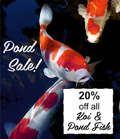 pond fish sale 20% off.jpg