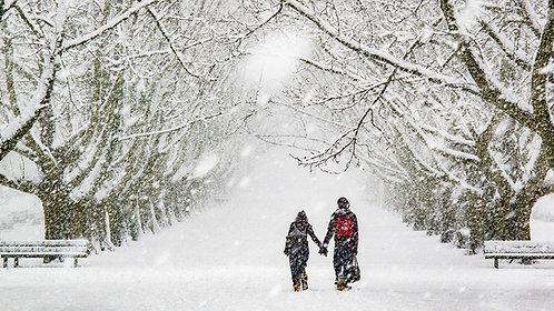 Snow | Minervalaan - Amsterdam