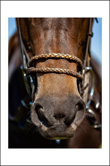 Polo horse | Vreeland - The Netherlands