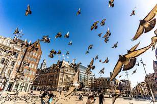 De Dam | Amsterdam