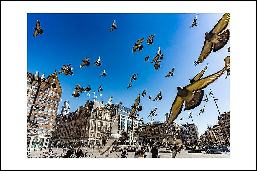 Dam Square | Amsterdam