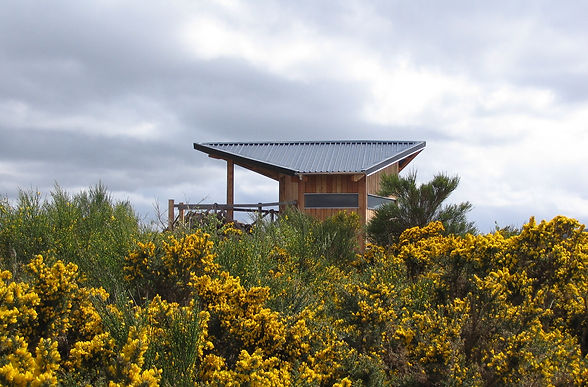 architectural timber bird hide in sustainable materials, Scotland