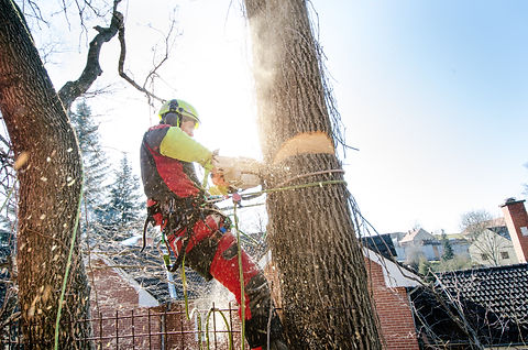 Arborist man cutting a branches with cha