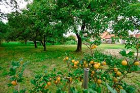 Pozemek Prosenice - veškeré plodiny mimo vinné révy zůstanou