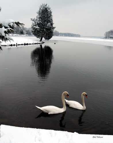 Winter Lake, Gibson