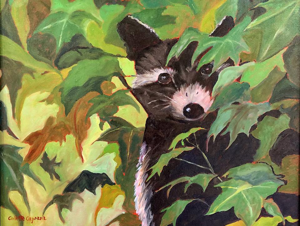 Racoon, Collette Caprara