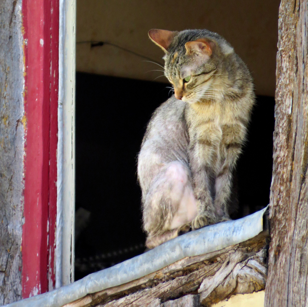 """""""Old Cat in Window,"""" by Penny A Parrish."""