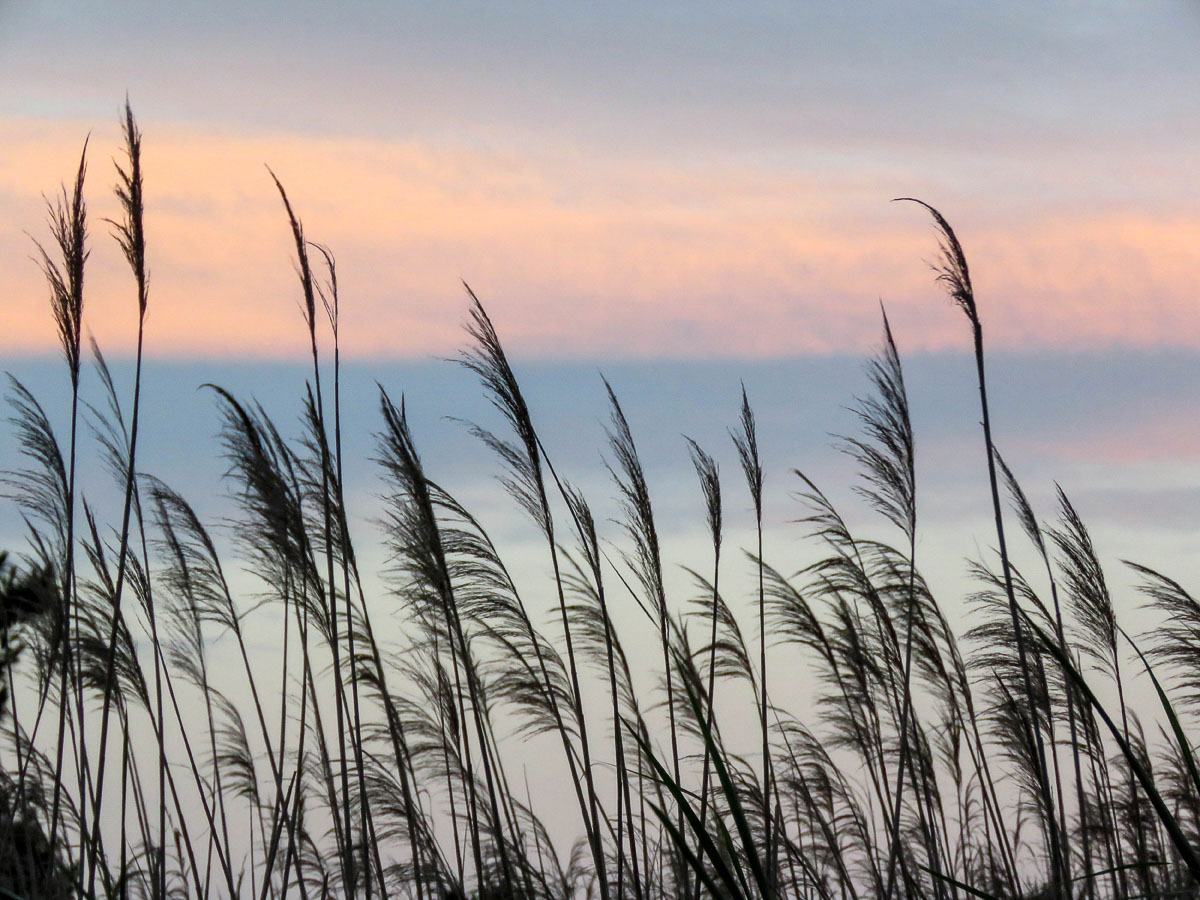 """""""Sea Oats"""" by Penny A Parrish."""