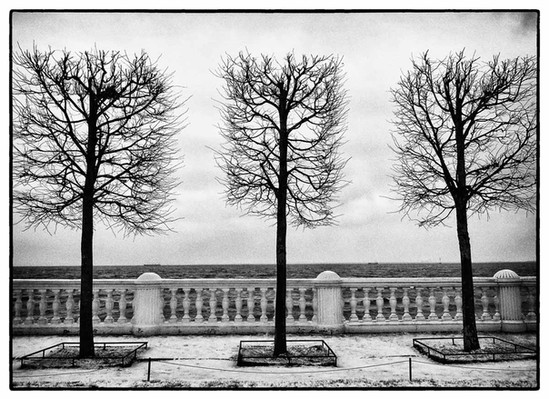 Parrish Penny A_Winter Trees, Gulf of Fi