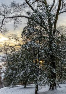 """""""Fresh Morning Snow,"""" by Buddy Lauer."""