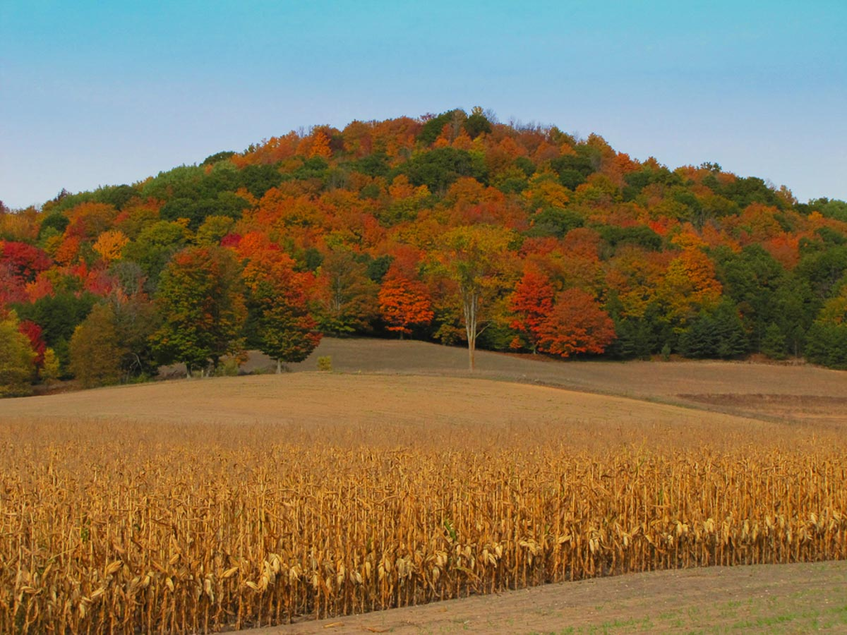 """""""Cornfield and Mountain"""", by Penny A Parrish"""