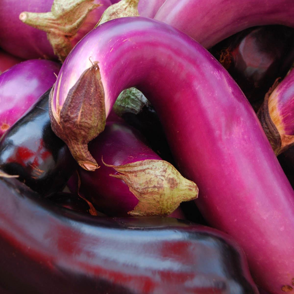 """Eggplant Cuddle,"" Penny Parrish"