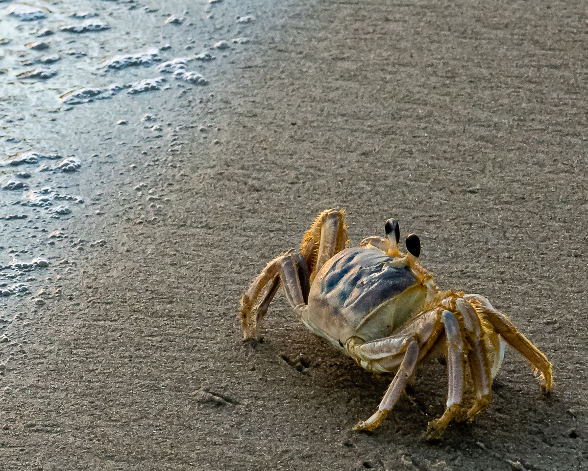 """""""Early Morning Beach Creature"""" by Buddy Lauer"""
