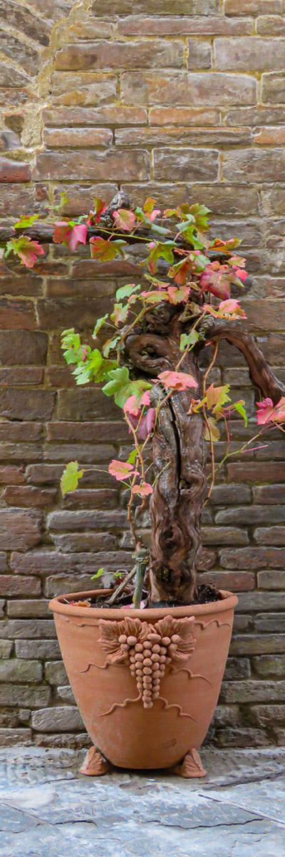 """""""Grape Vine"""", by Penny A Parrish"""