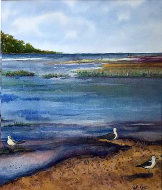 Gulls at Aquia Creek