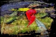 Norma Woodward_Take Heart_18x12_Photogra