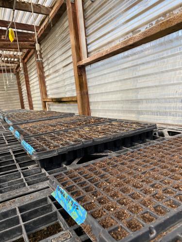 Greenhouse trays