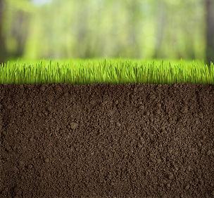 Terra vegetal São Paulo