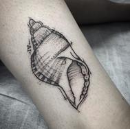 Triton shell, thank you Emily Contact me