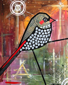 *SOLD! Red Eared Firetail  Thank you @de
